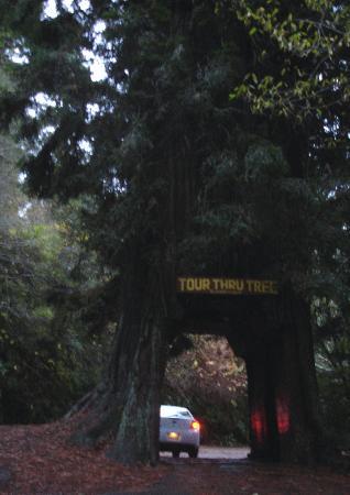 Tour-Through Tree: Tour Thru Tree, Klamath, CA