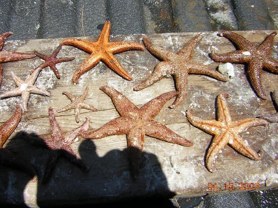 Red Coconut RV Park : Treasures from under the sea