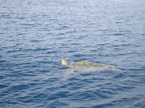 Kanuhura - Maldives: one of the scuba sites