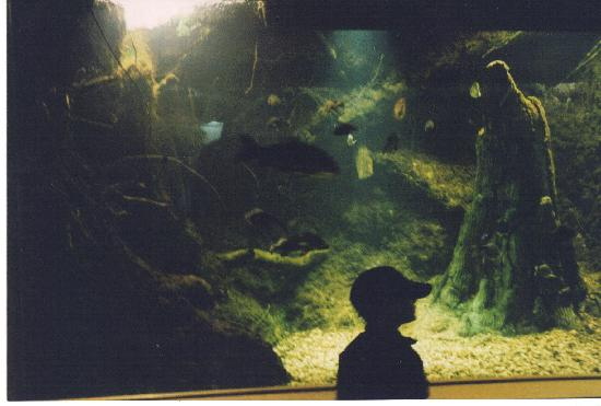 Tunica RiverPark : One of the aquariums.