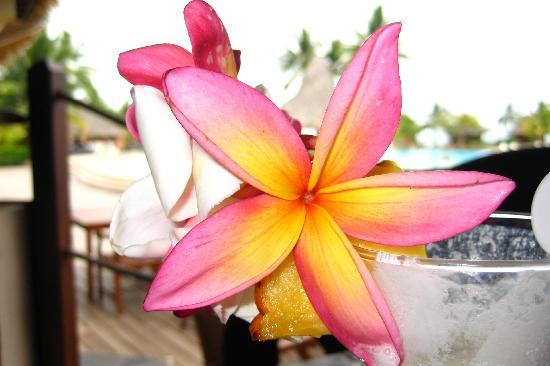 Bora Bora, French Polynesia: Tahiti