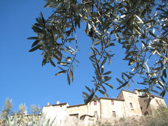 Olive trees everywhere! Trevi is an olive oil producing capital!