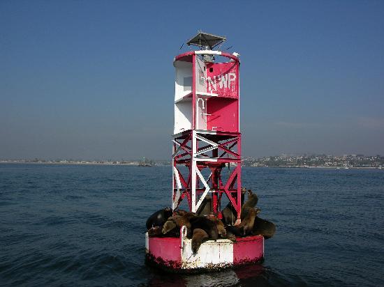 Newport Beach, Kaliforniya: Sea Lions Getting Some Rays
