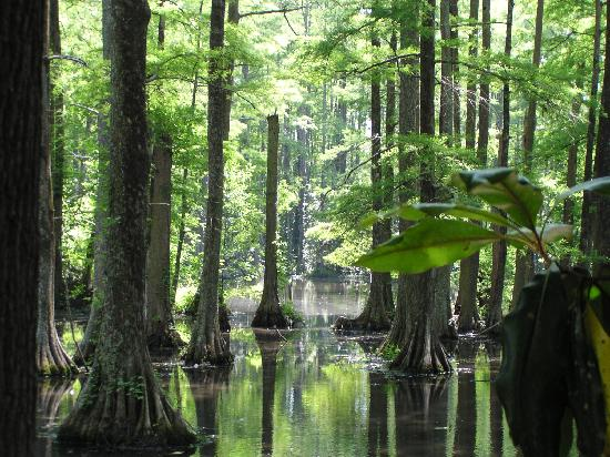 Sumter, Carolina del Sur: The swamp