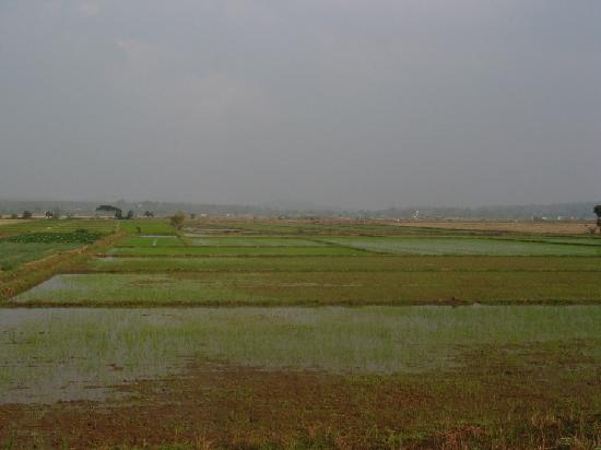 Tham Meuang On : Wiang Papao - Rice Fields