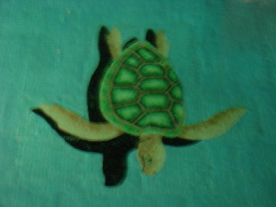 Sea of Cortez Beach Club: Turtle  in the pool!!!