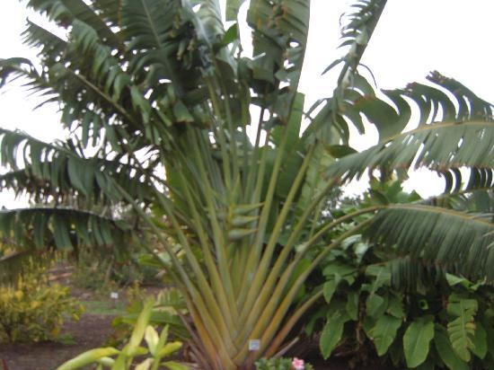 El Parque Botánico de Maspalomas: Palms.