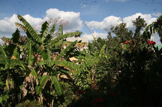 Casa Hamaca Guesthouse: Garden in front of the Casa Hamaca