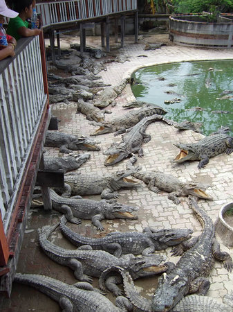 Samutprakan Crocodile Farm and Zoo - Bangkok - Ce quil faut savoir pour ...