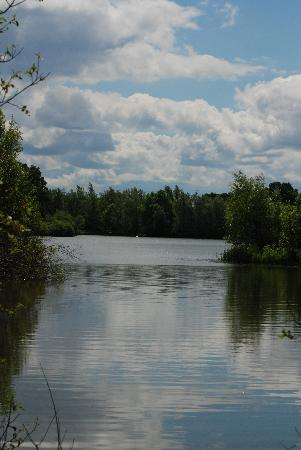 Dinton Pastures Country Park: Dinton Pastures - Black Swan Lake