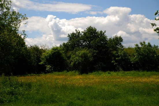 Hurst, UK: Dinton Pastures - meadow