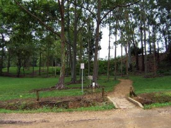 Keahua Forest Arboretum