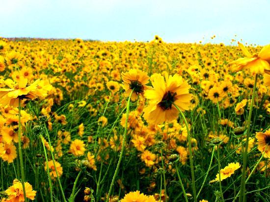 Hokkaido, Japan: Flower