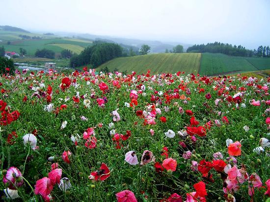 Hokkaido, Japón: Flower