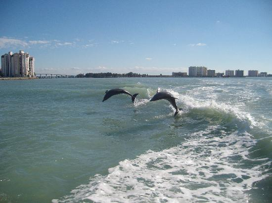 Sea Captain Resort on the Bay: Dolphins !!