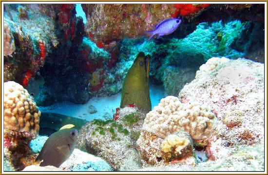Scuba Club Cozumel: Green Moray