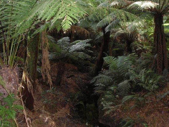 梅茨雷斯特热带雨林