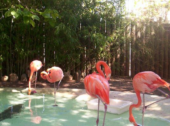 Atascadero zoo