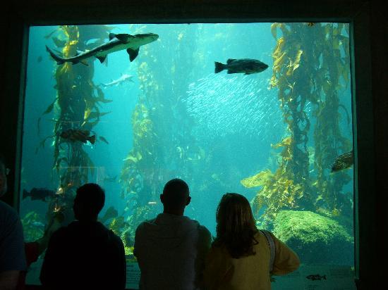 Aquarium Picture Of Monterey Bay Aquarium Monterey