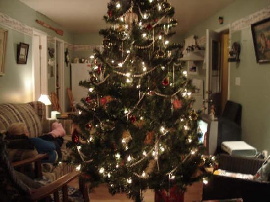 Cape Sable Island, Canada: Christmas Tree
