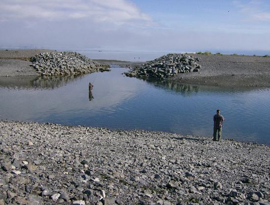 Homer Spit Tidal Pool Alaska Picture of Homer Spit Homer
