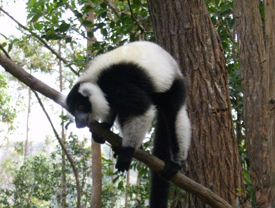 What to do and see in Andasibe, Madagascar: The Best Places and Tips