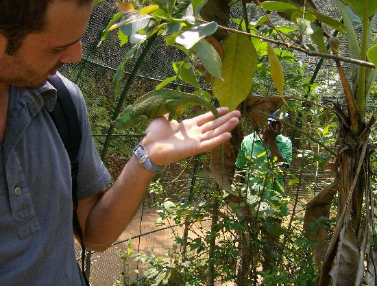 Andasibe-Mantadia National Park  (Reserve of Perinet) : il camaleonte poi morde!
