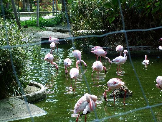 Selwo Aventura: Flamingos