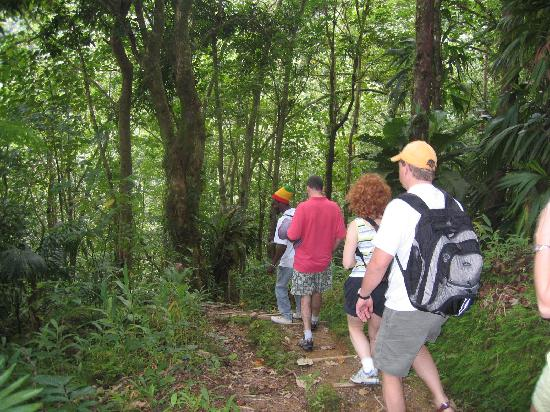 Crystals: Rain forest hike