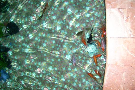 Country International Hotel: fish in hotel lobby