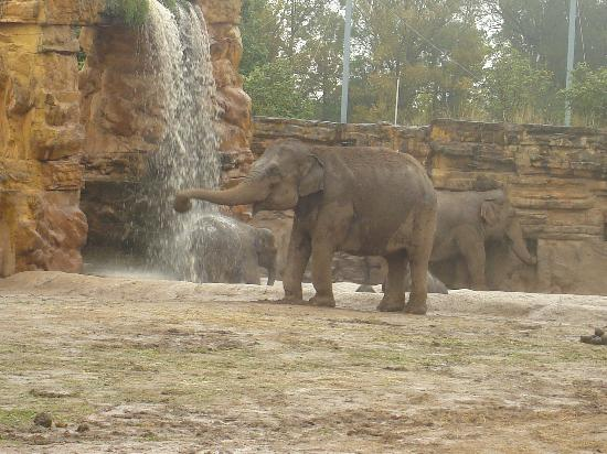 Chester, UK: Elephants