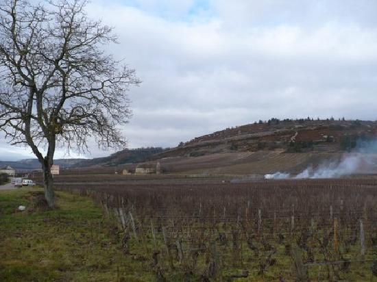 Domaine du Moulin aux Moines: Vineyards
