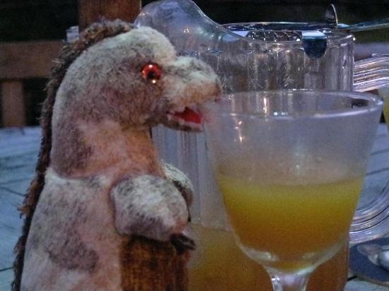 Swizzle Inn : Toothy loved his swizzle