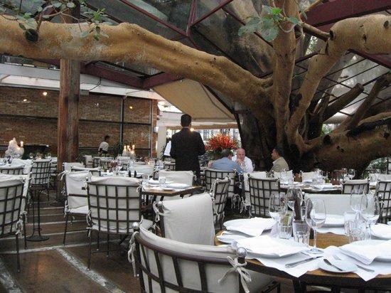 Figueira Rubaiyat View Inside 100 Year Old Fig Tree