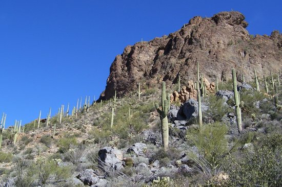Tucson mountain trail