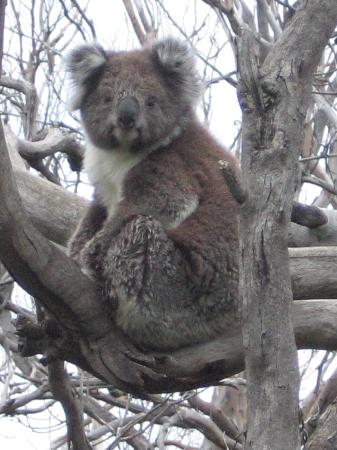 Kennet River: This little guy was just watching us