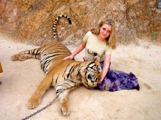 Special photo - Tiger Temple ( Wat Pa luang Ta Bua), Sai ...