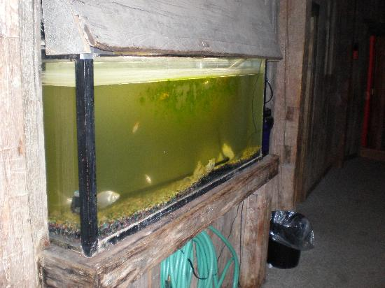 Grampa Grunts Lodge : The Fish Tank - Squid wanted to eat them