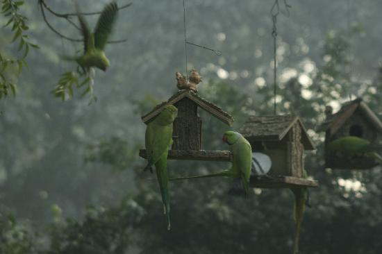 Lutyens Bungalow: the parrots that were there every morning