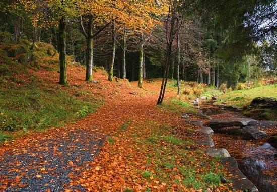 Mount Floyen and the Funicular (Floibanen): Floyen - Fløyen - at autumn - Bergen