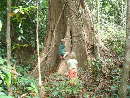 Ko Kut Ao Phrao: Jungletrek