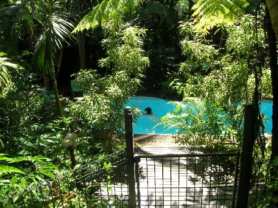 Wait a While in the Daintree: The Private Pool from the Terrace