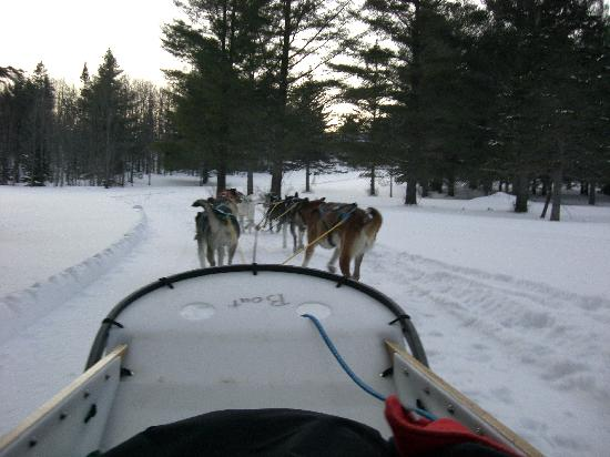 Eden Dogsledding: on the trails