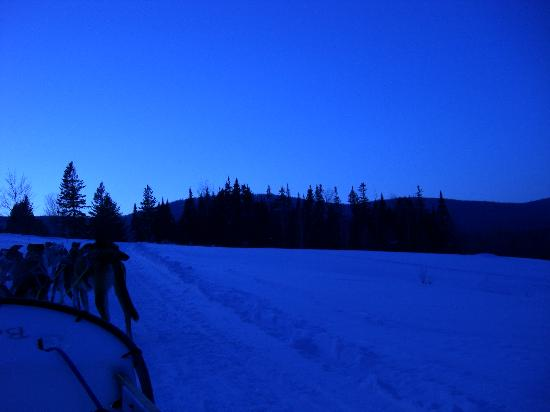 Eden Dogsledding: what a view!-dusk on a trail