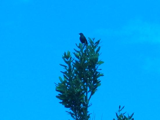 Te Ngahere Iti Foreststay: Native Tui Bird  taken from deck