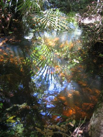 Te Ngahere Iti Foreststay: reflected beauty in a forest pool