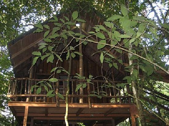Tree Houses Hotel Costa Rica : Tree House #3
