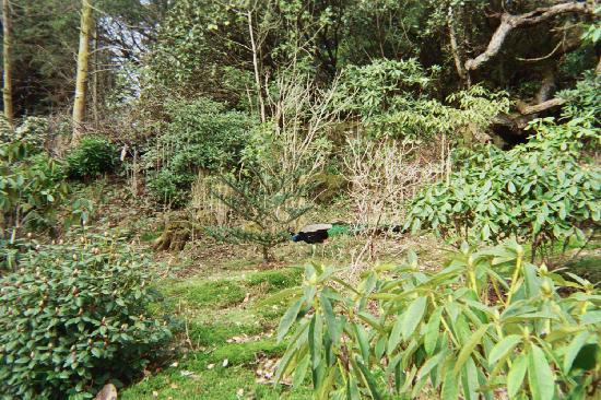 Achamore House: the gardens at achamore