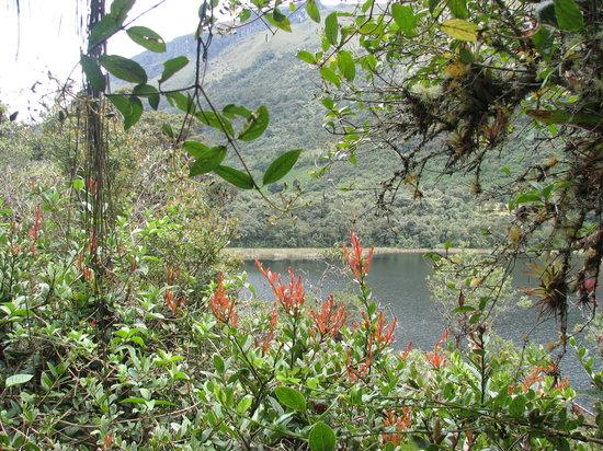 Ekuador: Cajas N.P.