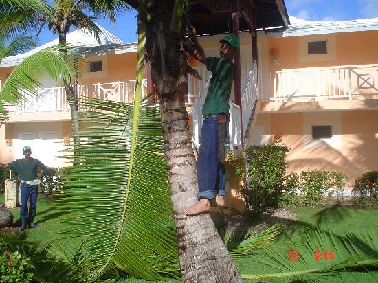 Grand Bahia Principe San Juan: Émondeur Républicain
